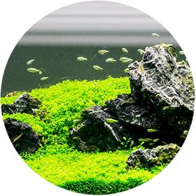 environment_round