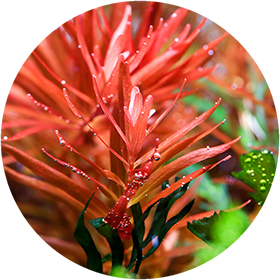 plant_grow_round