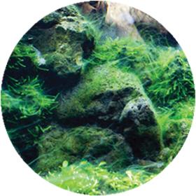 why_algae_round